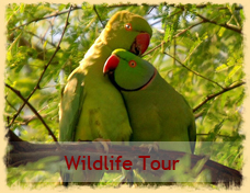 Wildlife Tour