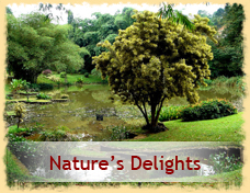Natures Delights